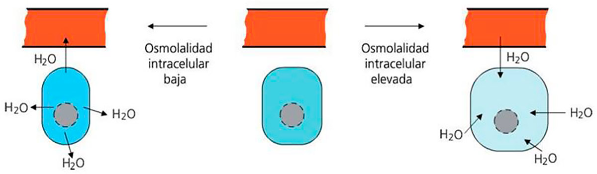 osmolaridade
