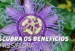 Passiflora: Descobre os Benefícios Naturais desta Planta