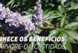 Vitex Agnus Castus: Propriedades e Benefícios para a Saúde Feminina