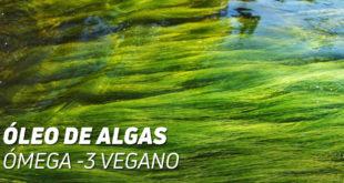 óleo algas veganos