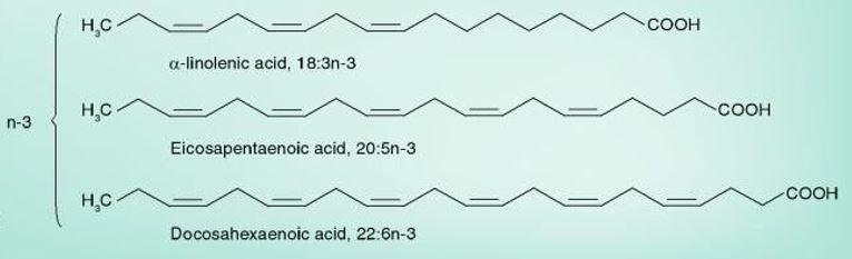 estrutura ácidos gordos
