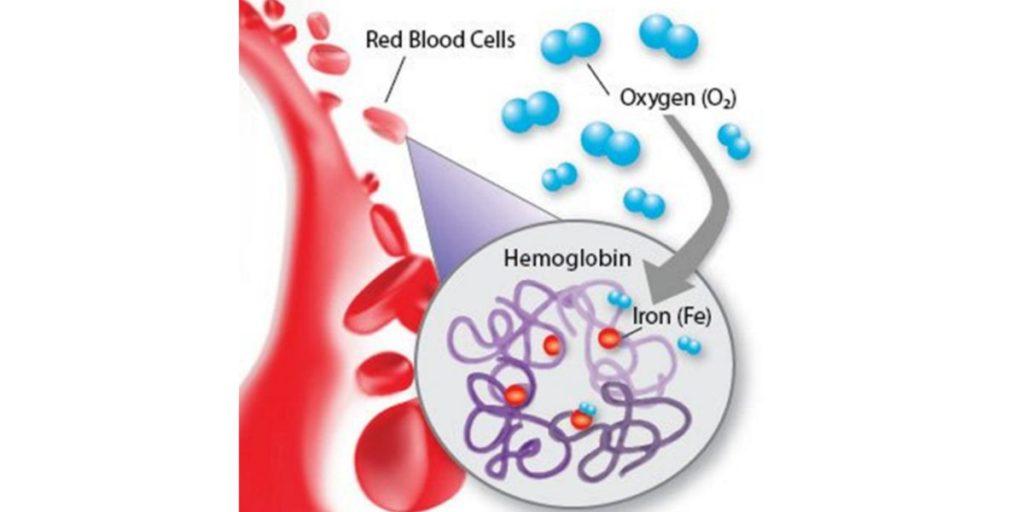 hemoglobina sangue