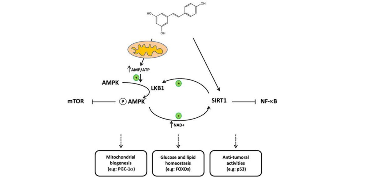 mecanismo biomolecular