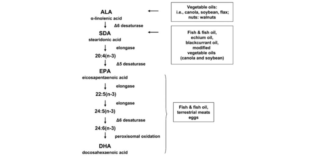 metabolismo alimentação