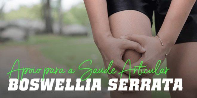 Boswellia Serrata: Tratamento Natural para as Dores nas Articulações
