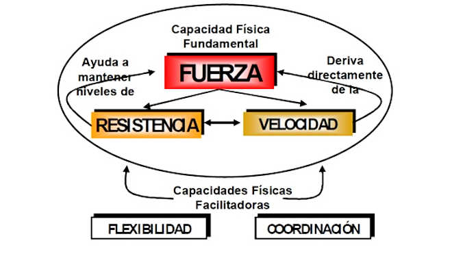 Hierarquia das capacidades físicas básicas