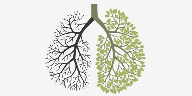 Suplementos para Fumadores