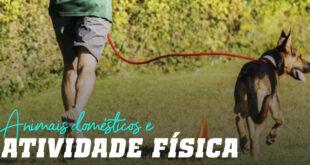 Animais de estimação e atividade física