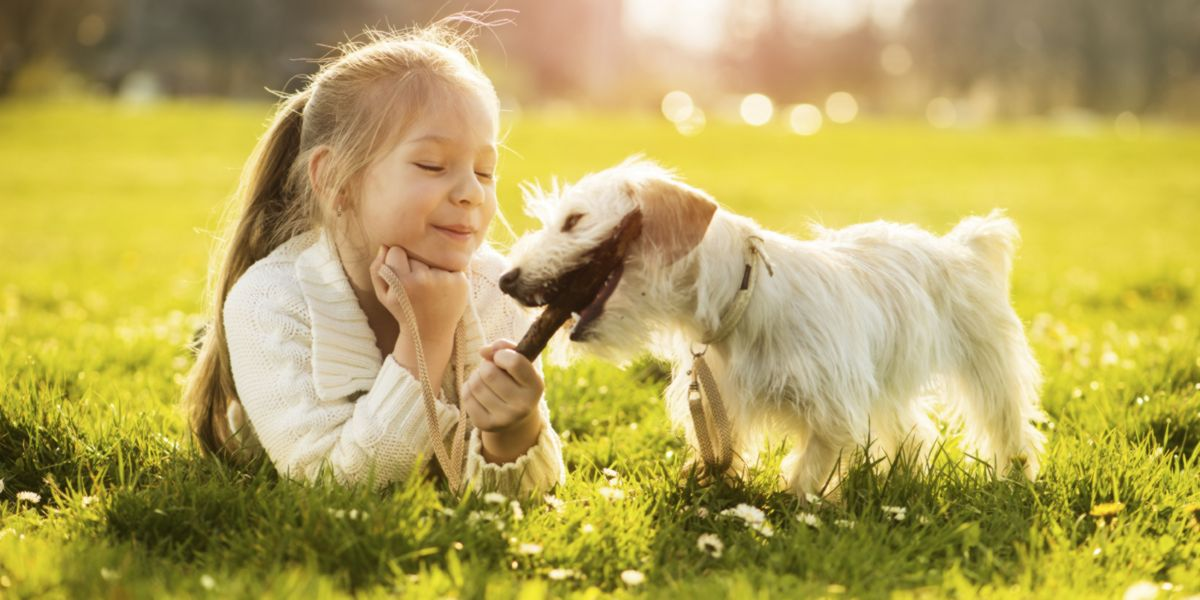 Animal de estimação e crianças