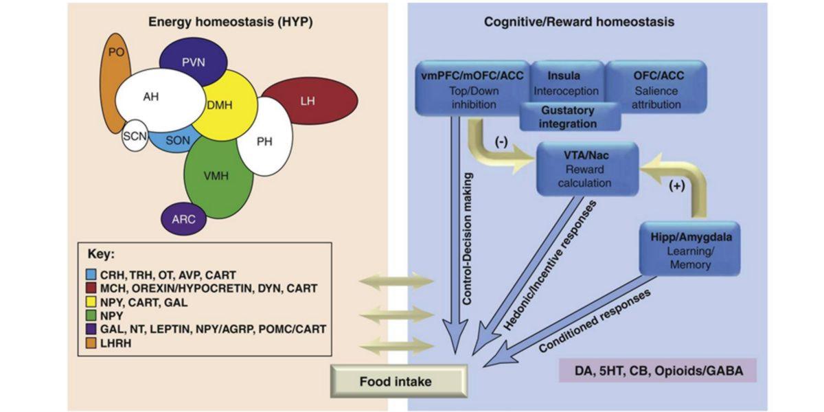 Hormonas que regulam a homeostase