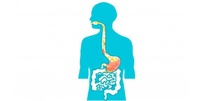 Supplementi di Enzimi Digestivi