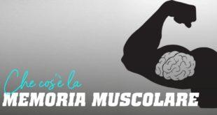 Che cos'è la memoria muscolare