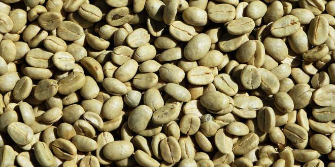 Chicchi di caffè verde non tostati