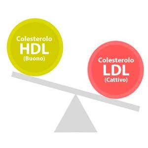 Colesterolo HDL e LDL