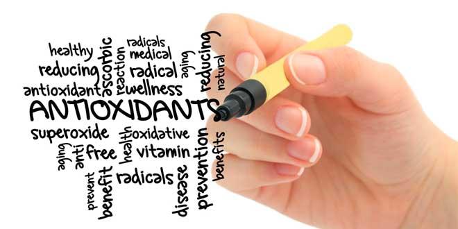 Funzioni della glutammina nell'organismo