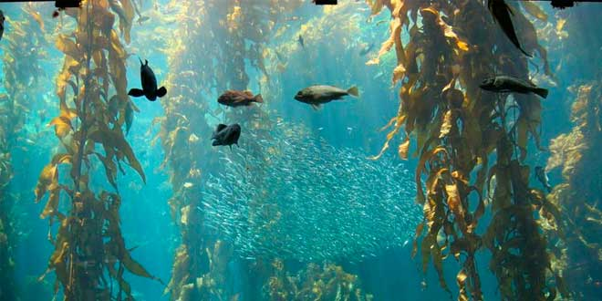 Cos'è il kelp