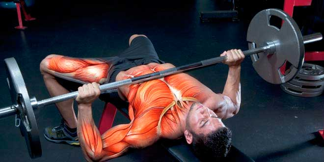 Esercizi di forza