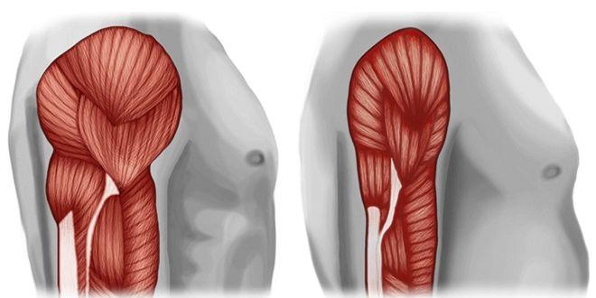 Massa Muscolare indicatore della salute