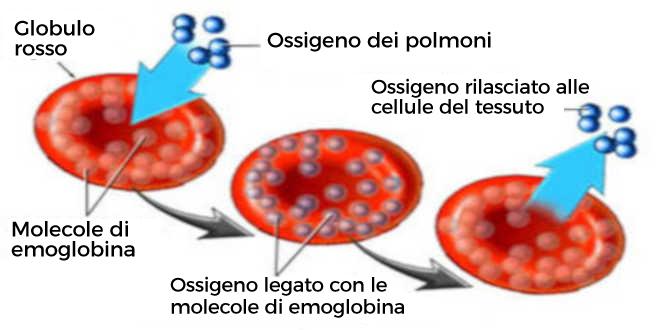 Ferro per combattere l'anemia