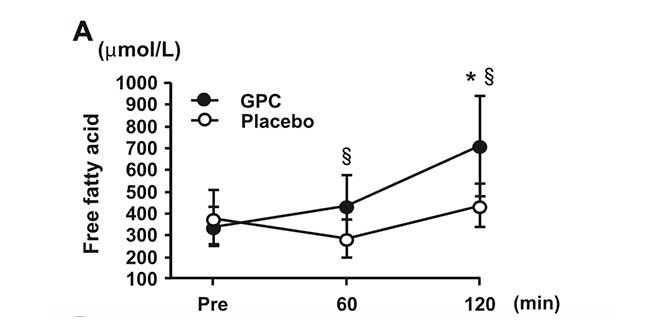 Alfa GPC e perdita di grasso