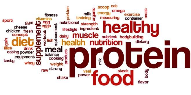Le proteine sono i mattoni di una costruzione