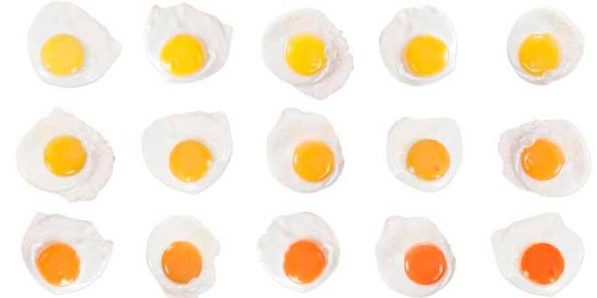 Possibili colorazioni del tuorlo d'uovo