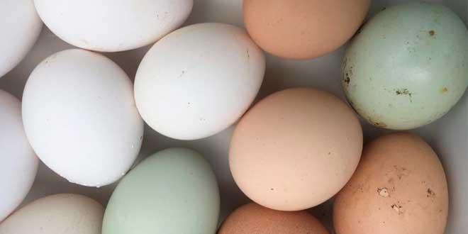 Proprietà delle uova di gallina