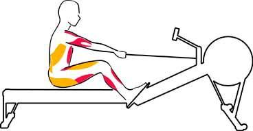 Muscoli utilizzati recovery