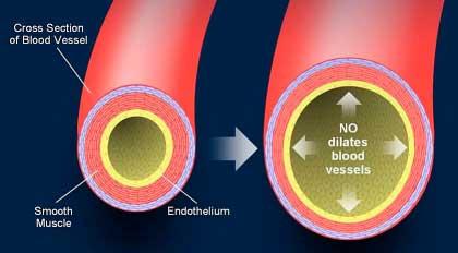 Arginina come precursore dell'ossido nitrico