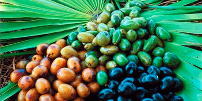 Proprietà dei frutti di saw palmetto