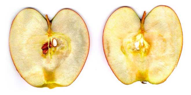 Ossidazione di una mela