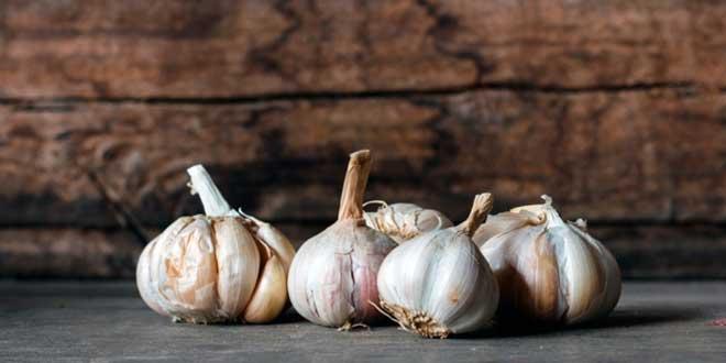 Benefici terapeutici dell'aglio