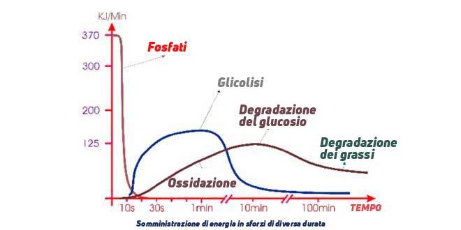 Somministrazione di energia in sforzi di varia durata