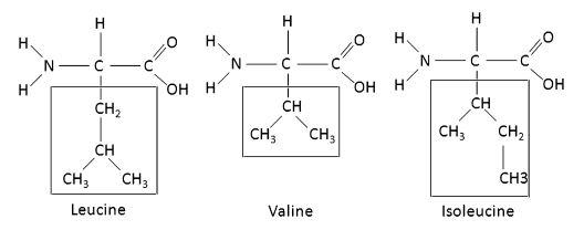 Struttura chimica dei BCAAs