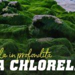 Alga chlorella: scoprirla in profonfità