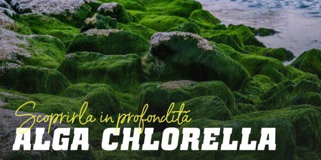 Alga Chlorella – Efficace per disintossicare l'organismo