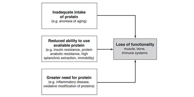 Necessità proteiche in menopausa
