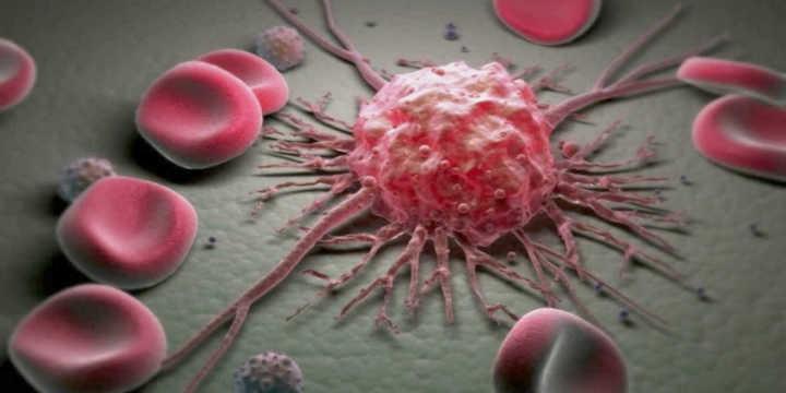 Shiitake e azione anticancerogena