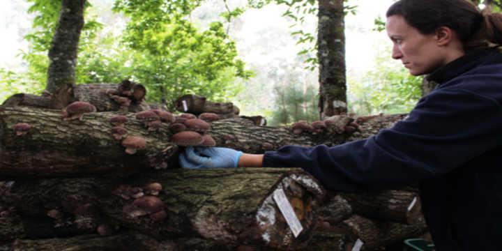 Raccolta dei funghi