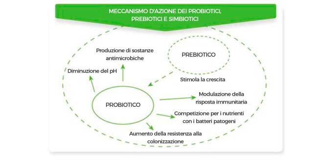 Schema del meccanismo d'azione dei probiotici