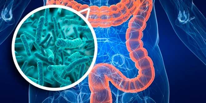 Cos'è il microbiota intestinale?