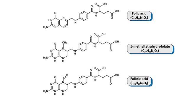 Differenze tra acido folico e folato