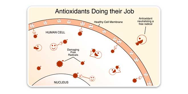 Funzione degli antiossidanti