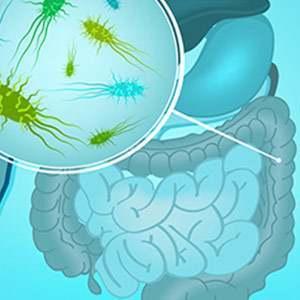 Inulina e flora intestinale