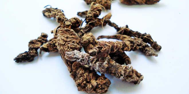 Valeriana – Un rimedio naturale per sconfiggere l'insonnia