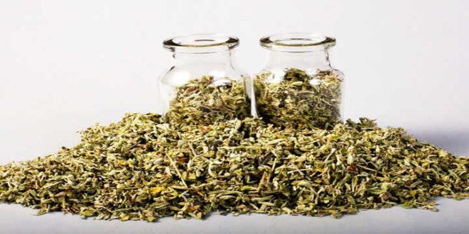 Damiana: un rimedio naturale per aumentare la libido