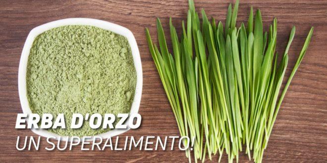 Erba d'Orzo: Proprietà e Benefici di questo Superfood