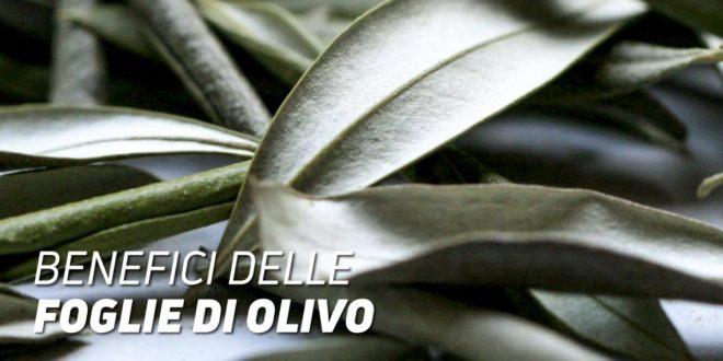 Benenfici delle Foglie di Olivo