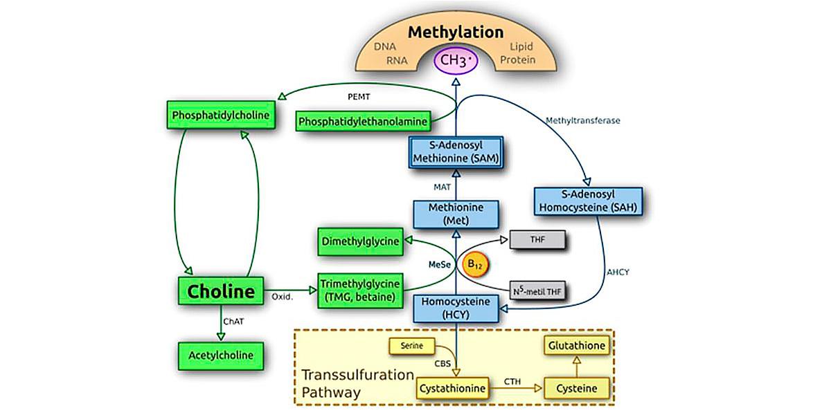 metilazione