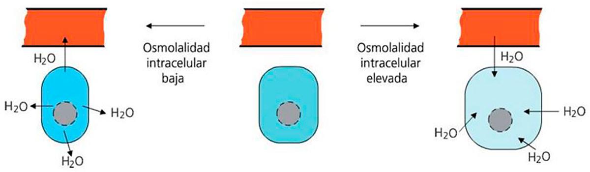 osmolarita